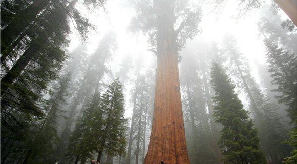 General-Sherman-Sequoia-National-Park-California_