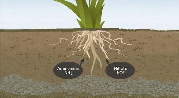 Plant-uptake-of-nitrogen-compounds20160510-29058-3cbkaj_2