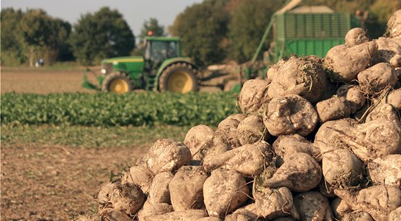 Sugar-beets-agriculture---PULP2VALUE--AdobeStock_40515332