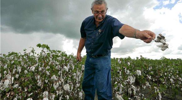 cotton_michael
