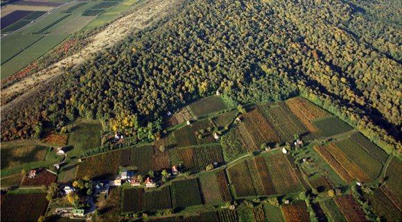 baranya_vill_ny_grape_press_house_plantation_vineyard_green_wine_region-1281528