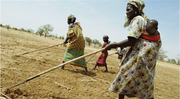 Ζητούμενο κατά τον FAO οι επενδύσεις στη γεωργία