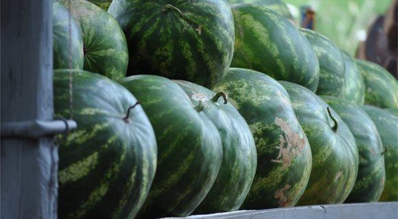green-watermelon-fruits-3609872-1