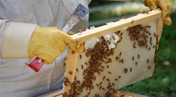 Μέχρι 21 Ιουλίου αιτήσεις για ερευνητικά προγράμματα στη μελισσοκομία