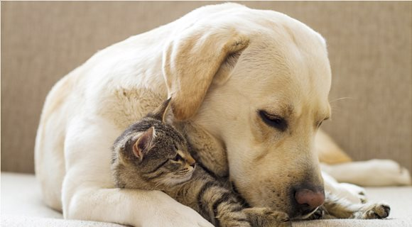 Αποσύρεται μέχρι νεωτέρας το ν/σ για ζώα συντροφιάς