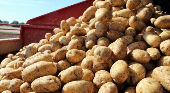 photo_1138398596_potatoes