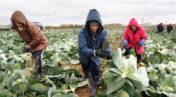 Ασφάλιση ΟΓΑ και εξάμηνη άδεια εργασίας σε παράτυπους αγρεργάτες