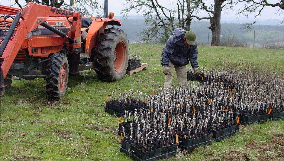 carlton-hills-new-vineyard-planting-02-29-08-046