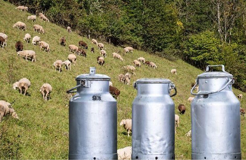 γαλα-προβατα