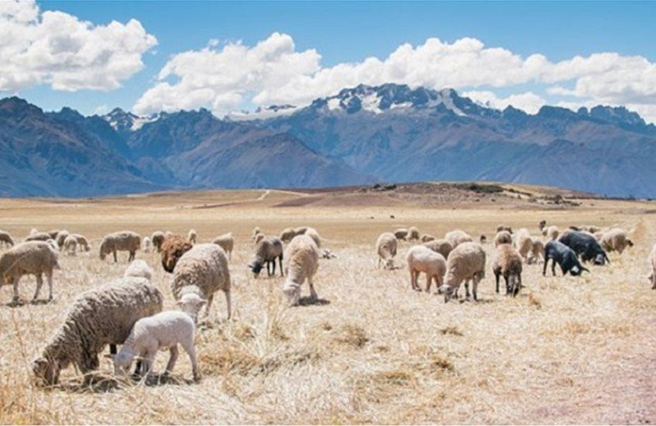 προβατα-βοσκη
