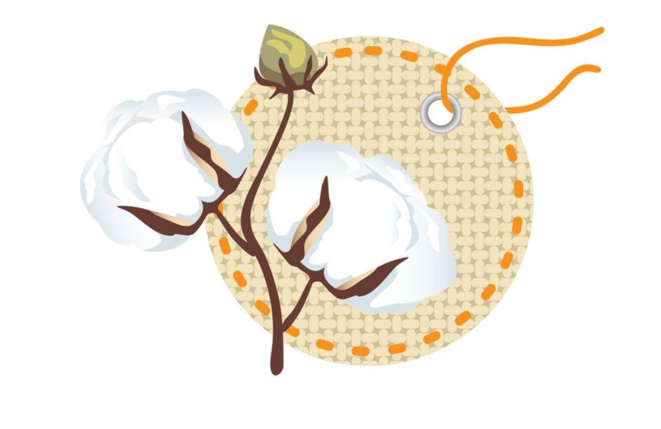 cotton-new_gia_eboreumata