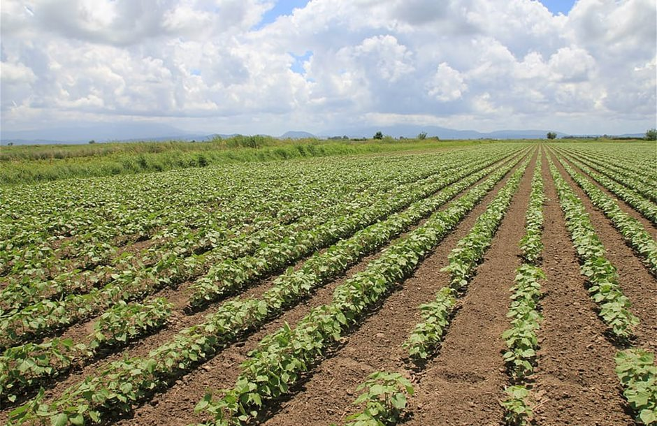 agriculture-area-cotton-sky-rural