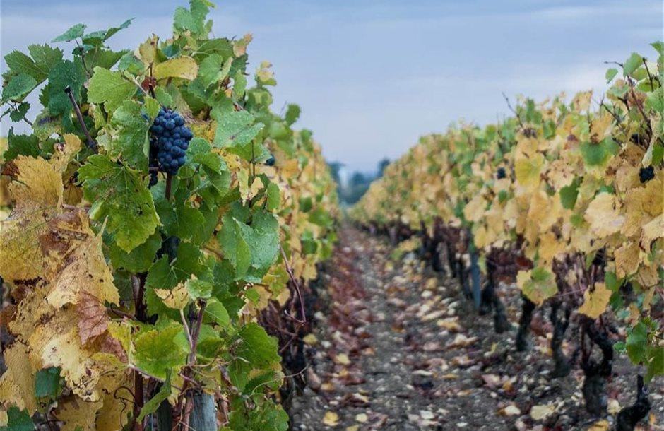 beaune-vineyards-james-lee-EEGl3pm3gRQ-unsplash-min-920x608
