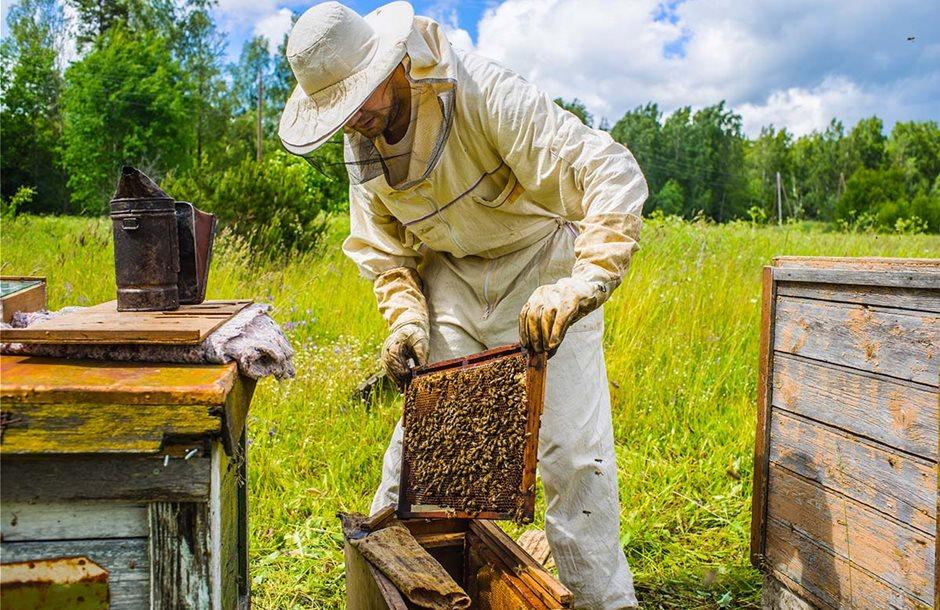 beekeeper_3
