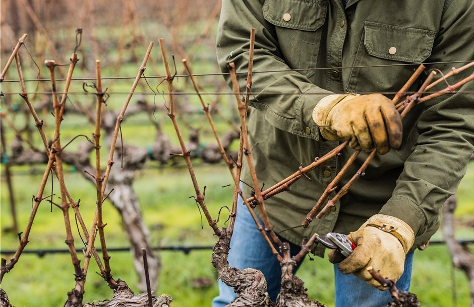 blog-vine-pruning__1_