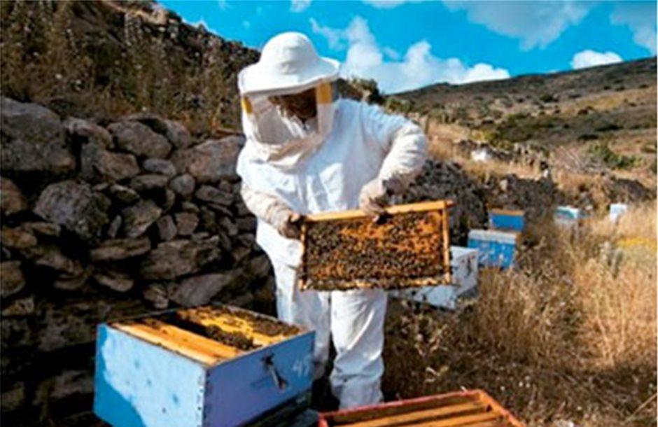 Δύσκολα πιάνουν βάση στα Σχέδια οι μελισσοκόμοι