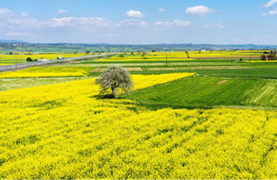 Πιο κίτρινη η Μακεδονία από ελαιοκράμβη και ηλίανθο