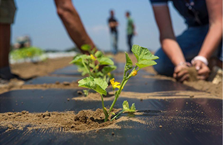 Στα 100 εκατ. η Βιολογική για φυτική παραγωγή