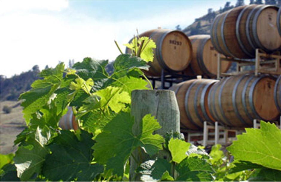 Μικρή άνοδος στην παραγωγή οίνου το 2011