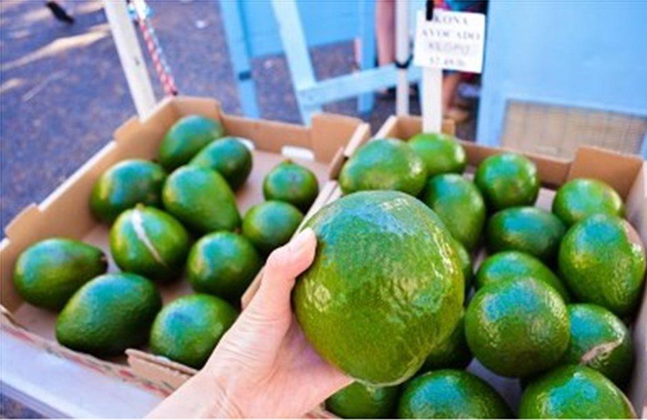 Απειλείται το αβοκάντο από τα προτεινόμενα κλιματικά μέτρα για τη ναυτιλία