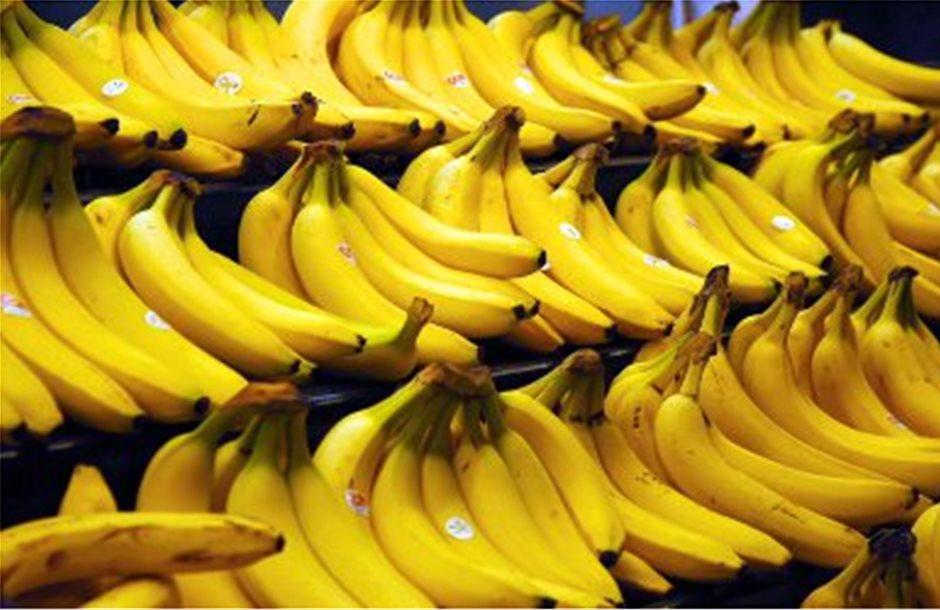 Συναγερμός για την παγκόσμια παραγωγή μπανάνας