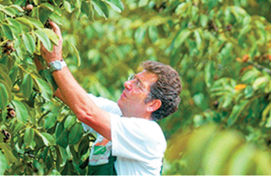 Εφάπαξ επιδότηση ως 9.000 ευρώ για φύτευση δένδρων