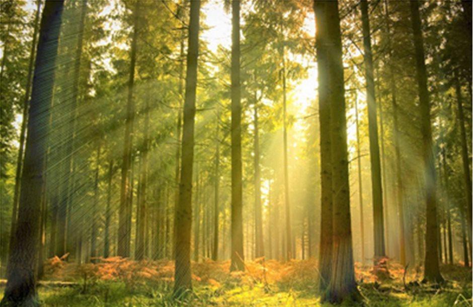 Σχέδιο φύτευσης ενός δις δέντρων στη Νέα Ζηλανδία