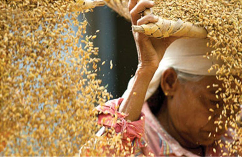 Σε υψηλά εξαμήνου οι τιμές των τροφίμων λόγω της μειωμένης σοδειάς δημητριακών