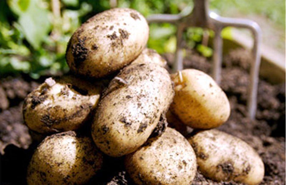 Σε άνοδο οι τιμές της πατάτας στην Ευρώπη μέχρι το 2018