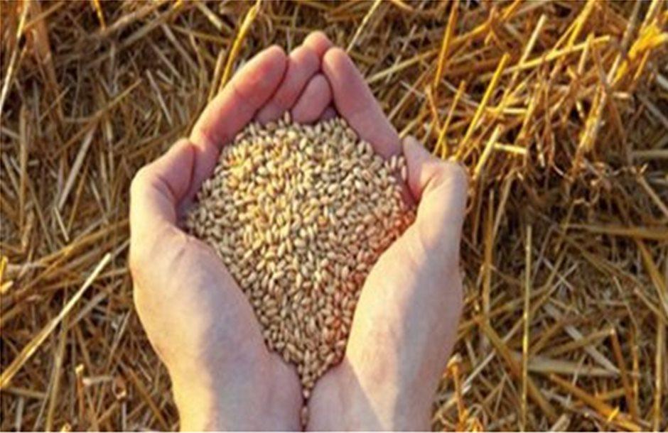 Καταψήφιση του νόμου για την εμπορία σπόρων ζητούν Γεωτεχνικοί