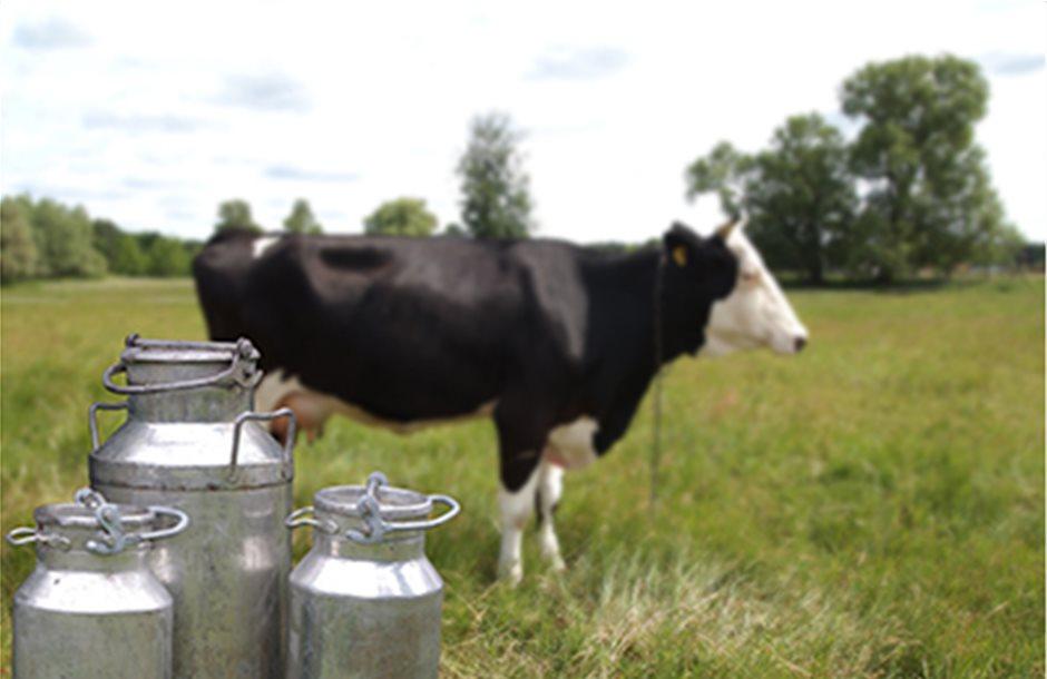 Υποτυπώδη ισοζύγια «έπνιξαν» τις τιμές στο αγελαδινό γάλα