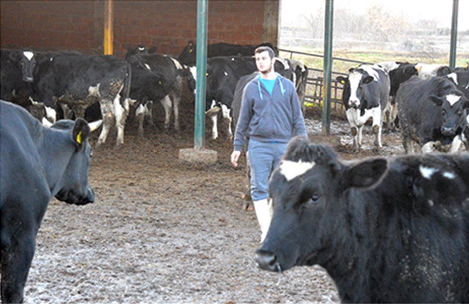 Διδάσκει αγελαδοτροφία ο Θεσσαλονικιός «Κτηνοτρόφος της Χρονιάς»