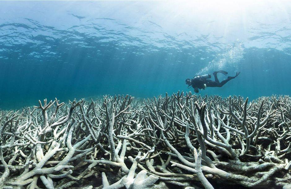 lefkansi-koralia
