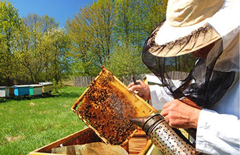 Και οι συνταξιούχοι ΟΓΑ στα πριμ μελισσοκομίας