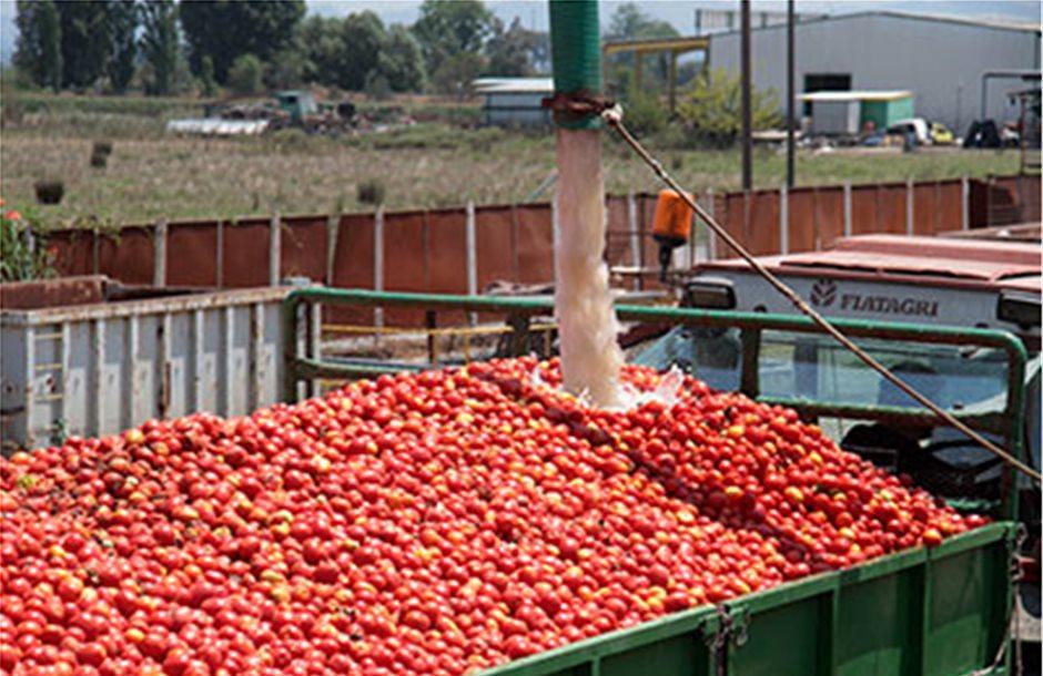 Χωρίς αποζημίωση η βιομηχανική ντομάτα, ο ΕΛΓΑ πληρώνει μόνο το σκίσιμο