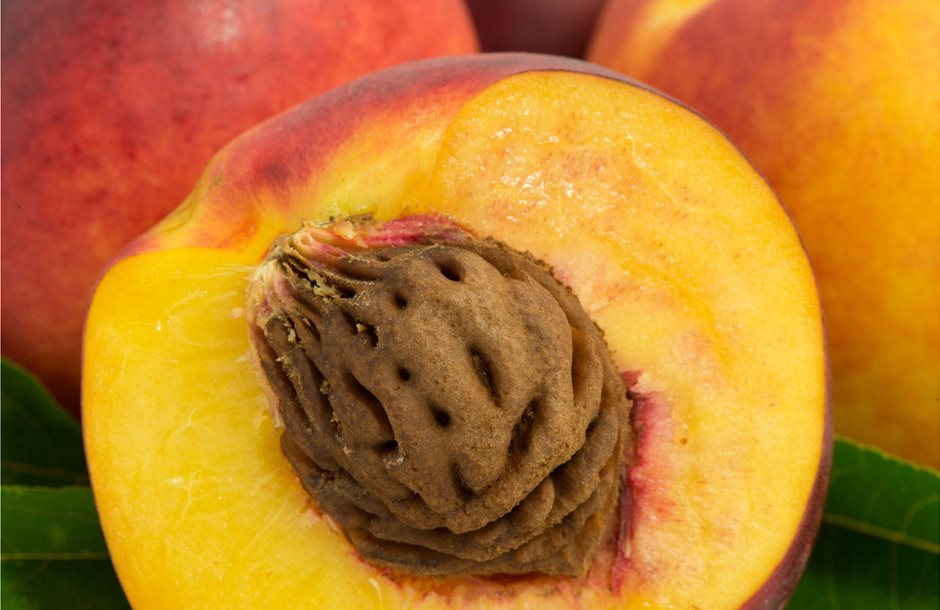peach-pits-poisoning