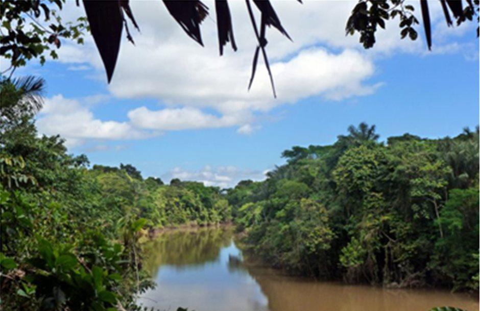 Χάθηκαν σχεδόν 5 εκατ. στρέμματα τροπικού δάσους στο Περού το 2001-2016