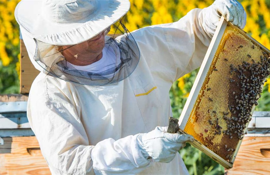 photo_208546894_beekeeper-working-in-the-field-of-sunflowers-