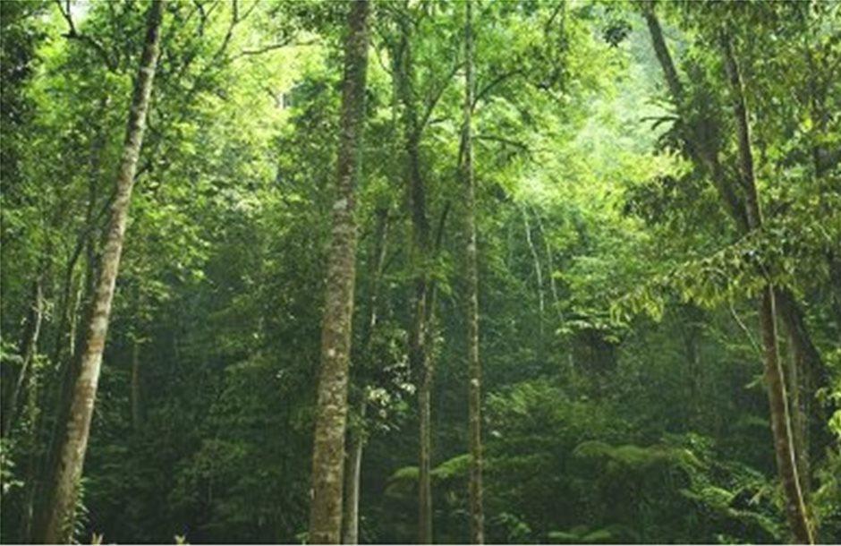 Δάση και πυρκαγιές συντέλεσαν στην αρχαία υπερθέρμανση