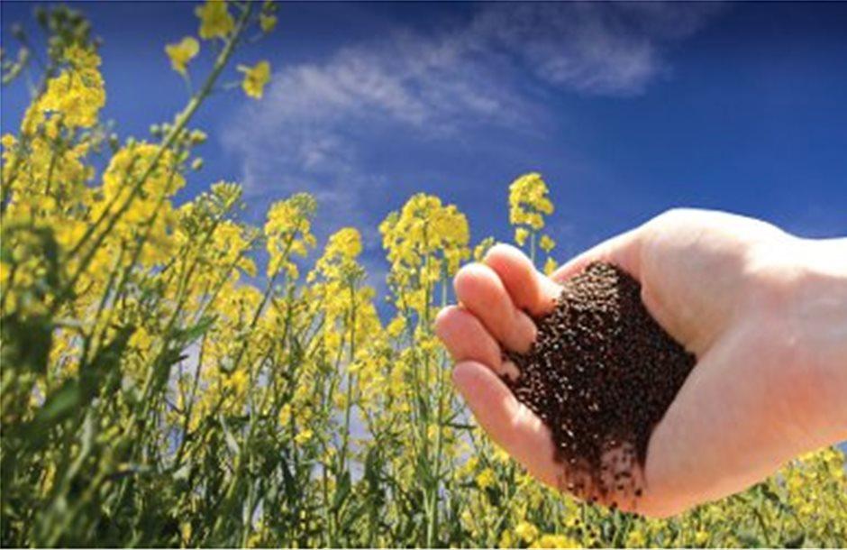 Αύξηση 8% στην παγκόσμια παραγωγή ελαιούχων σπόρων