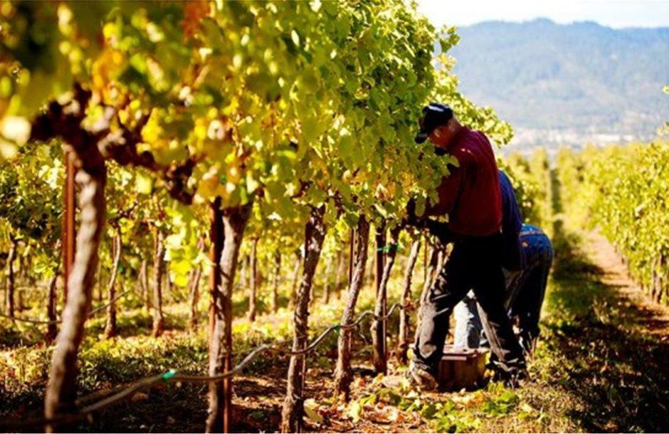 rodney-strong-vineyards-02_970_528_60_s_c1_2