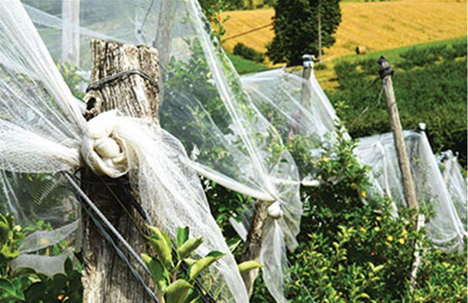 Αιτήσεις για αντιχαλαζικά δίχτυα μέχρι και τις 16 Σεπτεμβρίου