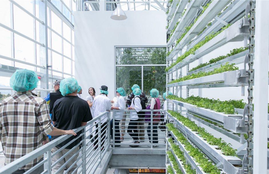 vertical-harvest-workers