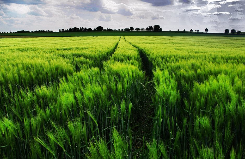 ws_Vibrant_Green_Wheat_Field_Path_1920x1200__1_