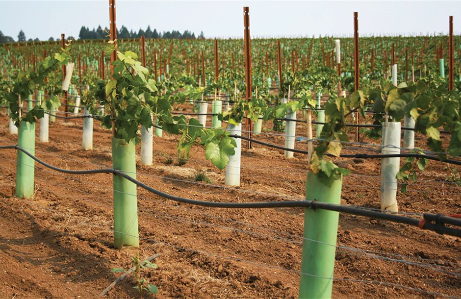 young-vineyard-planted-2012