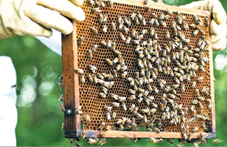 Με ενίσχυση για σκευάσµατα η νέα τριετία των Μελισσοκοµικών