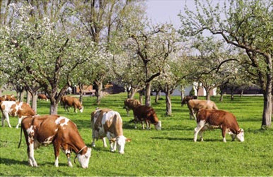 Πολλά τα λάθη και στη βιολογική κτηνοτροφία