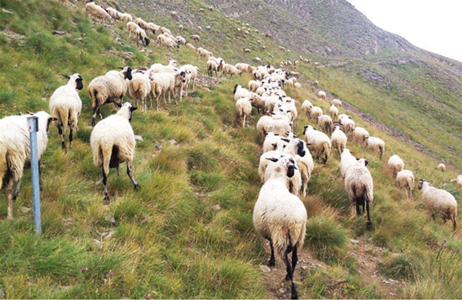 Παράταση για Μητρώο ζητούν οι κτηνοτρόφοι