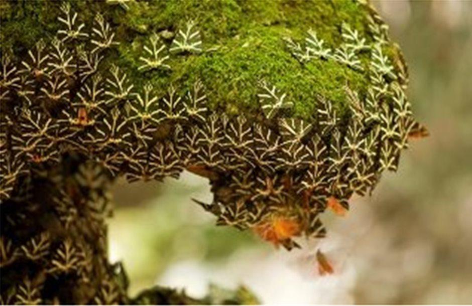 Νέο είδος γρύλου ανακαλύφθηκε στην Κοιλάδα των Πεταλούδων της Ρόδου