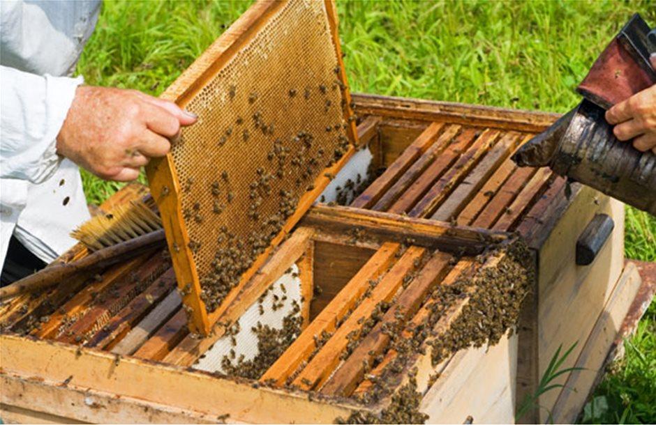 Οι μελισσοκομικοί χειρισμοί του Μαρτίου